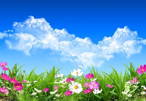 flores-de-primavera-spring-flowers-landscapes-paisajes-g