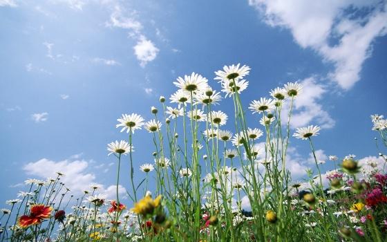 Flores-Y-Cielo
