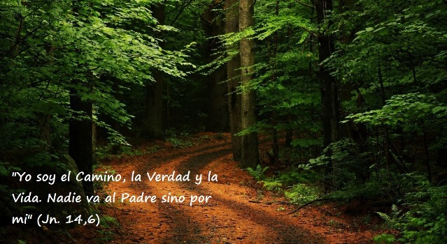 beautiful_forest_path_2-wallpaper-1366x768